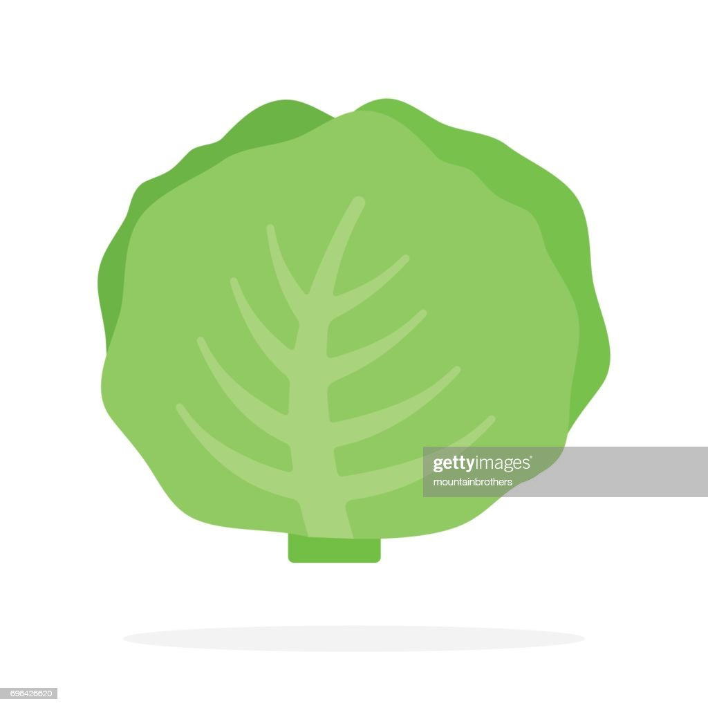 White cabbage vector flat isolated