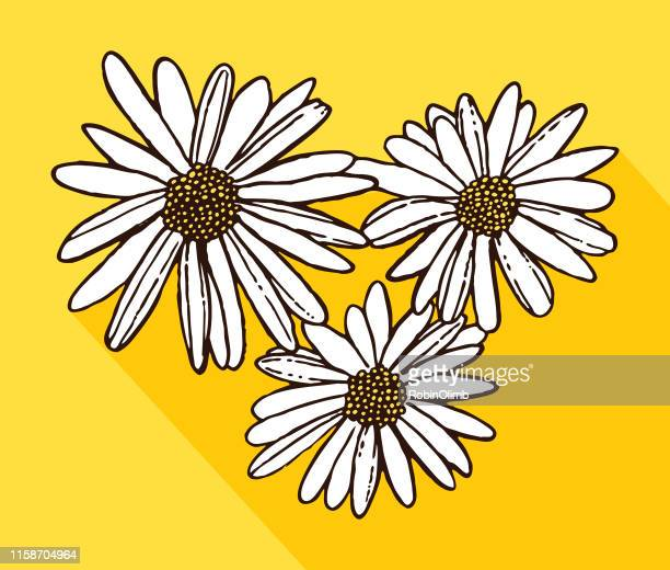white daisies - daisy stock illustrations