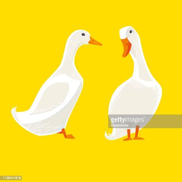 white ducks - duck bird stock illustrations
