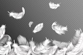 White feathers background. Falling flying fluffy swan, dove or angel wings feather, soft bird plumage. Style flyer vector concept