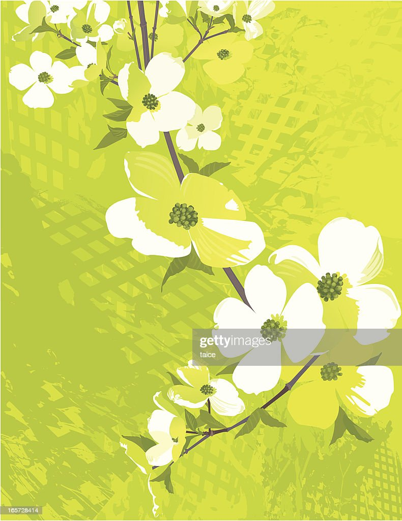 White Flowers of Dogwood Tree