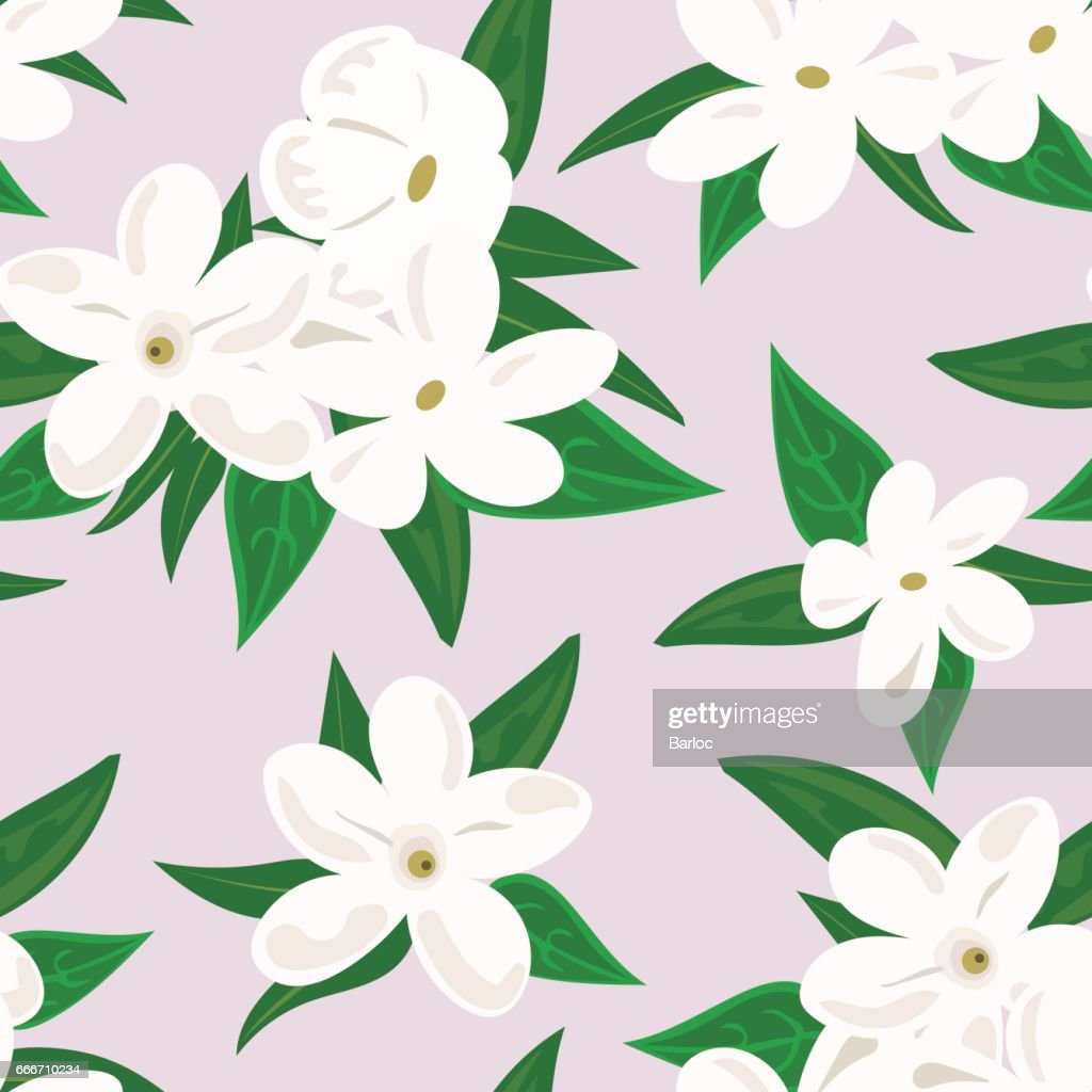White jasmine flower branch of jasmine flowers isolated on white white jasmine flower branch of jasmine flowers isolated on white background spring flowers izmirmasajfo