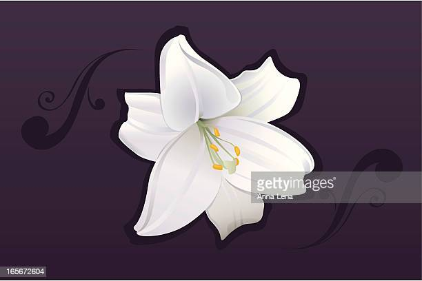 white lily blossom - lily stock illustrations, clip art, cartoons, & icons