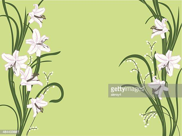 white lily border - lily stock illustrations, clip art, cartoons, & icons
