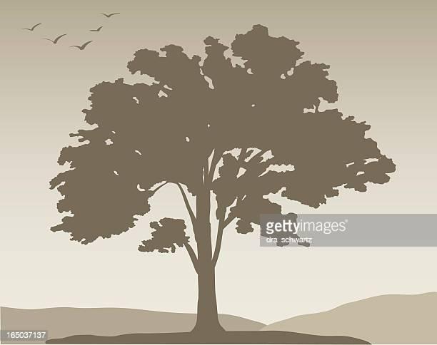 White oak tree #376, Vector