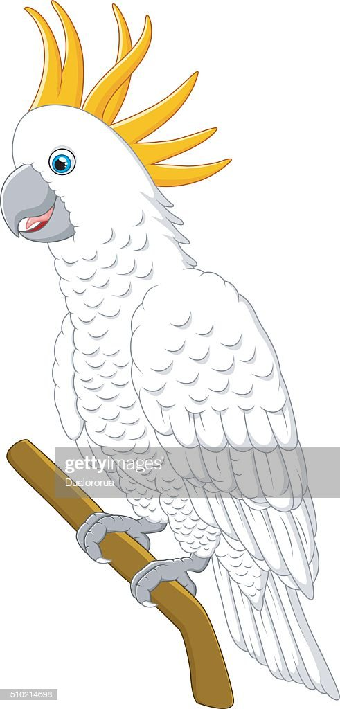 White parrot sitting on a branch Isolated on white background