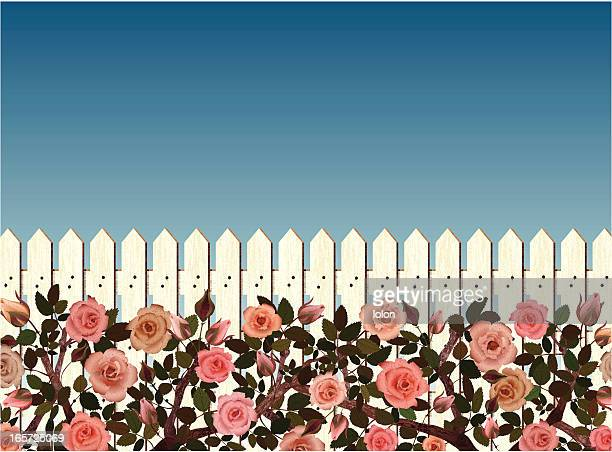 white picket fence and rose bushes