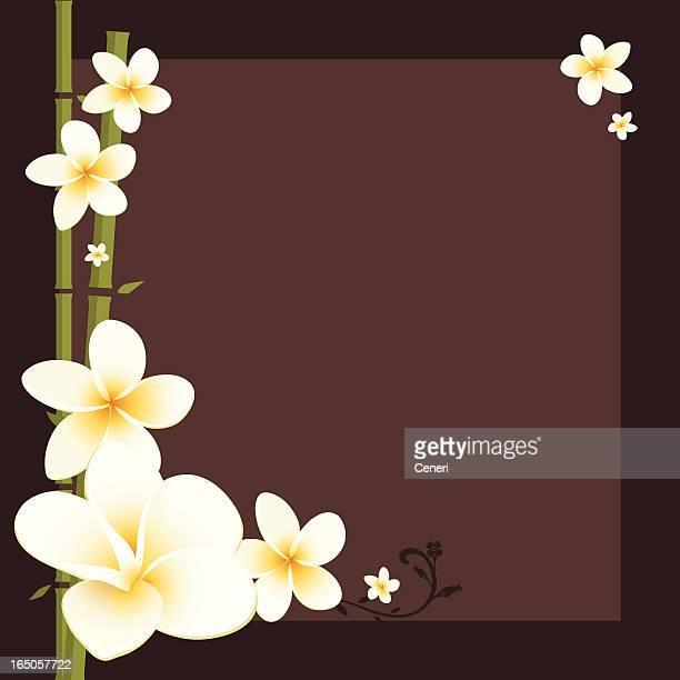 白いプルメリアと竹フレーム - ジャスミン点のイラスト素材/クリップアート素材/マンガ素材/アイコン素材