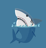 White shark in the sea