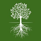 White tree with roots on green background.
