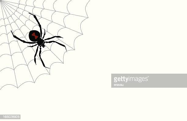 white widow - black widow spider stock illustrations, clip art, cartoons, & icons