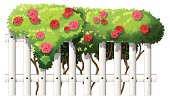 white wooden fence with flowering plants
