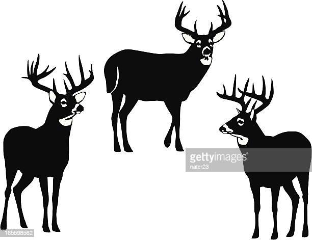 whitetail bucks - stag stock illustrations
