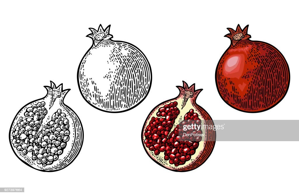 Whole and half garnet fruit with seed. Vector engraving