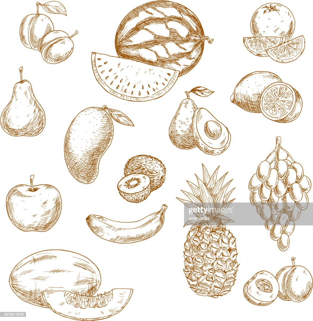 Whole and halved fresh fruits vintage sketch icons