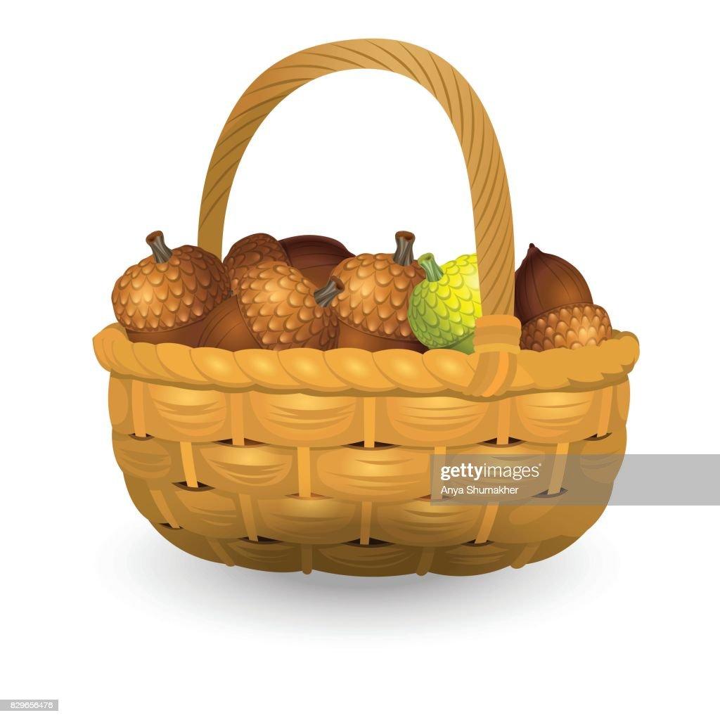 Wicker basket full of acorns isolated on white background. Vector Illustration
