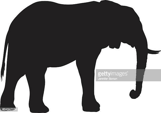 ilustrações, clipart, desenhos animados e ícones de wild african elephant silhouette - zimbabwe
