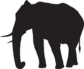 Wild African Elephant Silhouette