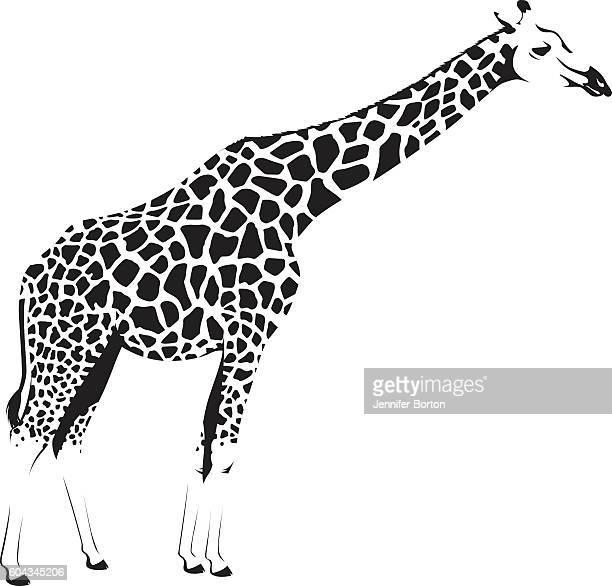 illustrations, cliparts, dessins animés et icônes de girafe d'afrique sauvage - girafe
