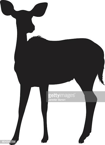 illustrations, cliparts, dessins animés et icônes de wild african nyala deer silhouette - biche