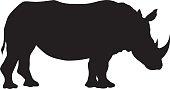 Wild African White Rhinocerous Silhouette