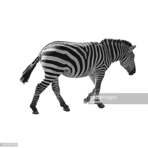 Wilde afrikanische Zebra Illustration auf weißem Hintergrund