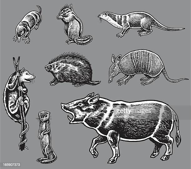 wild aminals - boar, armadillo, porcupine, mole - marsupial stock illustrations