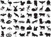 wild and domestic animals silhouette