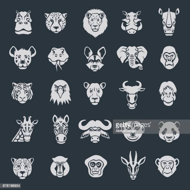 wild animal face icons - african buffalo stock illustrations, clip art, cartoons, & icons