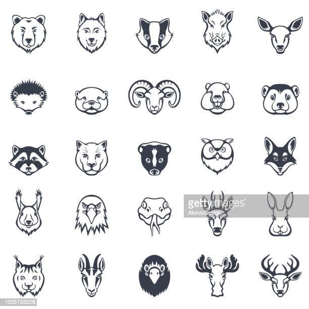 ilustraciones, imágenes clip art, dibujos animados e iconos de stock de conjunto de iconos de caras de animales salvajes - puma