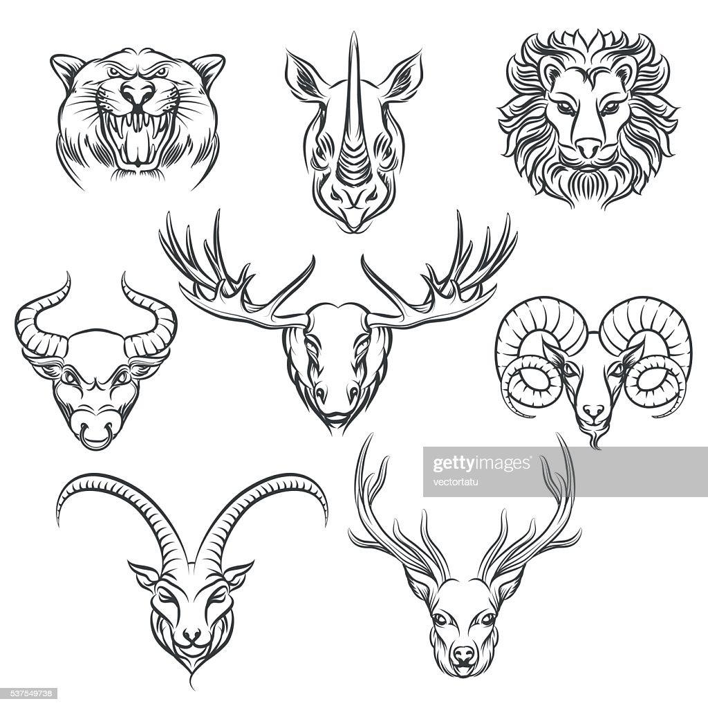 Wild animals hand drawn heads