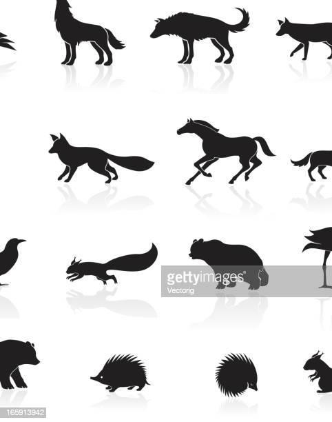 wild animals icon - squirrel stock illustrations