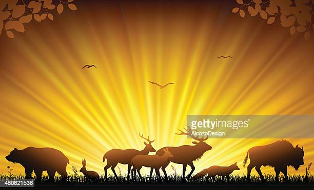 wild animals - european bison stock illustrations, clip art, cartoons, & icons
