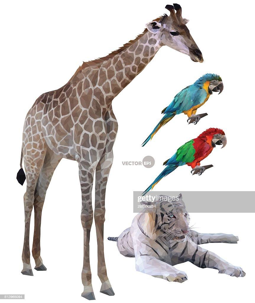 wild animals-giraffe, white tiger, parrots