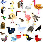 Wild, aquatic, tropical and urban birds flat icons