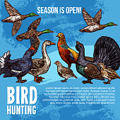 Wild birds, hunting sport. Vector sketch