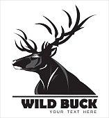 Wild Black Buck