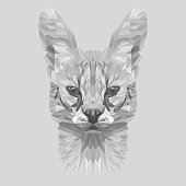 Wild cat animal low poly design. Triangle vector illustration.