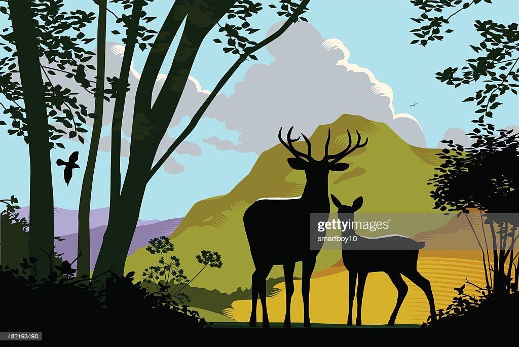 Deer en la naturaleza salvaje : Ilustración de stock