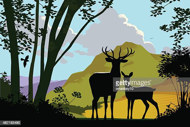 wild deer in countryside - animal wildlife stock illustrations