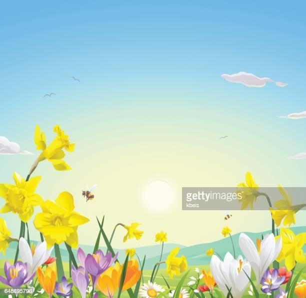 wild flower field - daffodil stock illustrations, clip art, cartoons, & icons