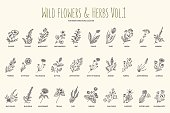 Wild flowers and herbs hand drawn set. Volume 1. Vintage