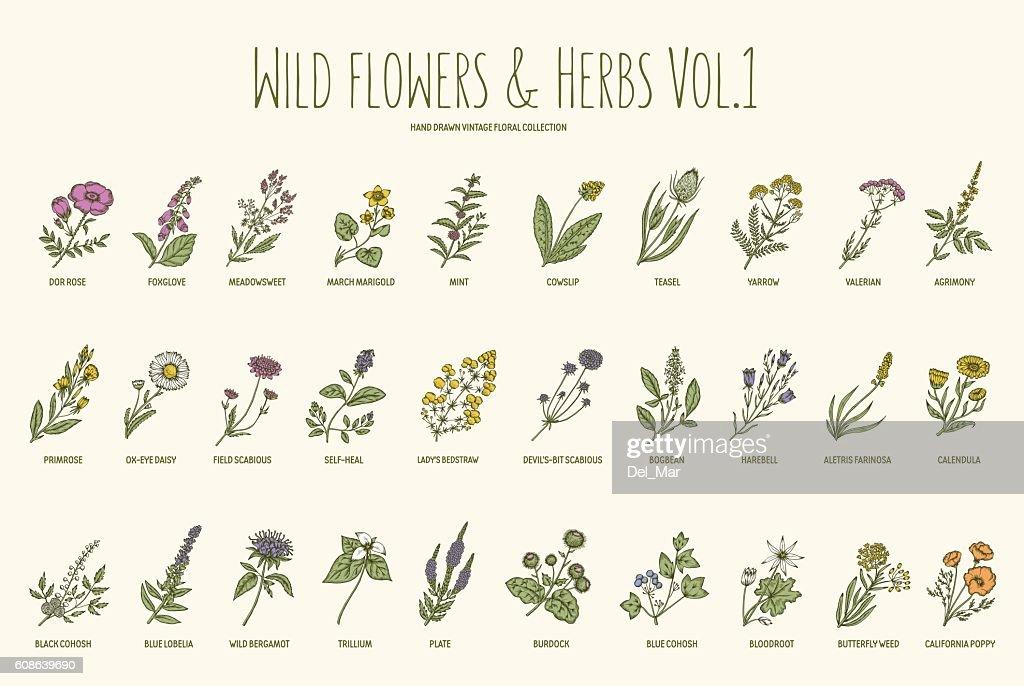 Wild flowers and herbs hand drawn set. Volume 1. Vintage