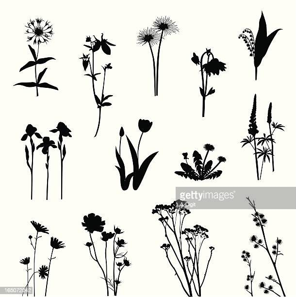 wild flowers vector silhouette - thistle stock illustrations, clip art, cartoons, & icons