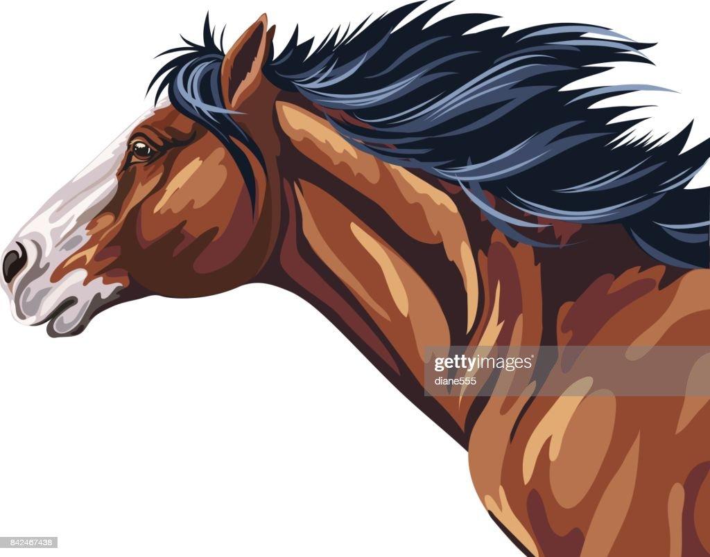 Wild Horse Running : stock illustration