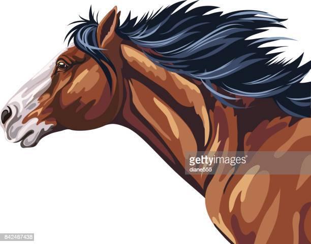 wild horse running - animal mane stock illustrations