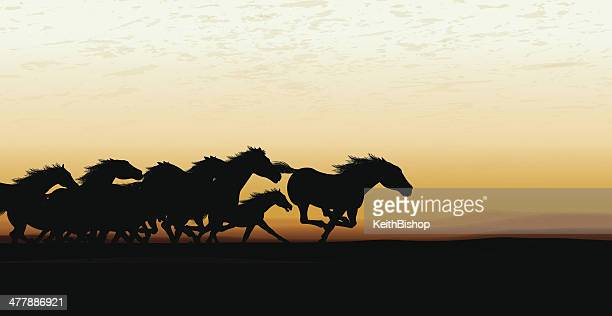 wild horse stampede background - horse stock illustrations