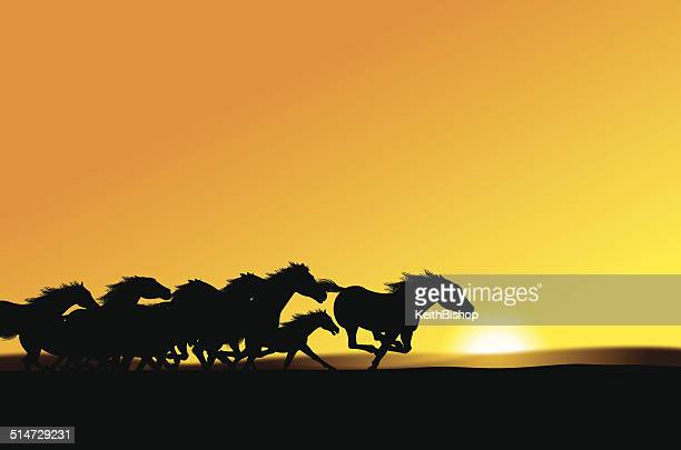 wild horses - stampede background - stallion stock illustrations, clip art, cartoons, & icons