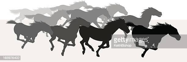 ilustraciones, imágenes clip art, dibujos animados e iconos de stock de estampida de caballos salvajes-silueta - fauna silvestre