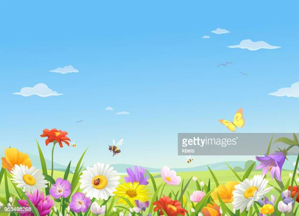 wild meadow flowers under a blue sky - springtime stock illustrations